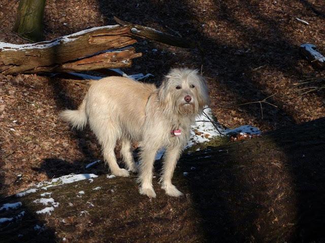Rückblick Reha Depression Fortschritte Rückschritte Waldspaziergang Hund