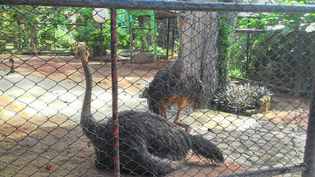taman rimba | wisata jambi | wonderful Indonesia