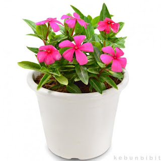 http://newhealthyku.blogspot.co.id/2015/11/tanaman-tanaman-herbal-ampuh-atasi-kanker-serviks.html