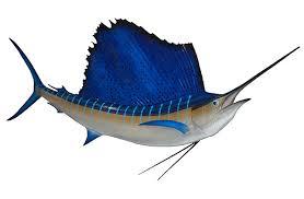 Sekilas Tentang Ikan Layar