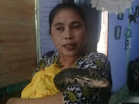 Sulsel Heboh! Wanita di Palopo Ini Mengaku Lahirkan Biawak dan Diberi Nama Mansur
