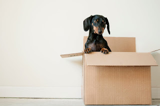 millenials-moving-because-of-pets