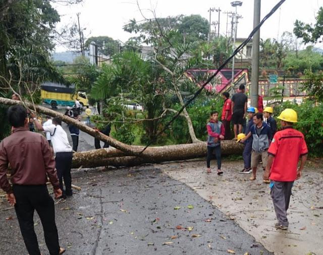 Hujan Deras, Satu Pohon Tumbang