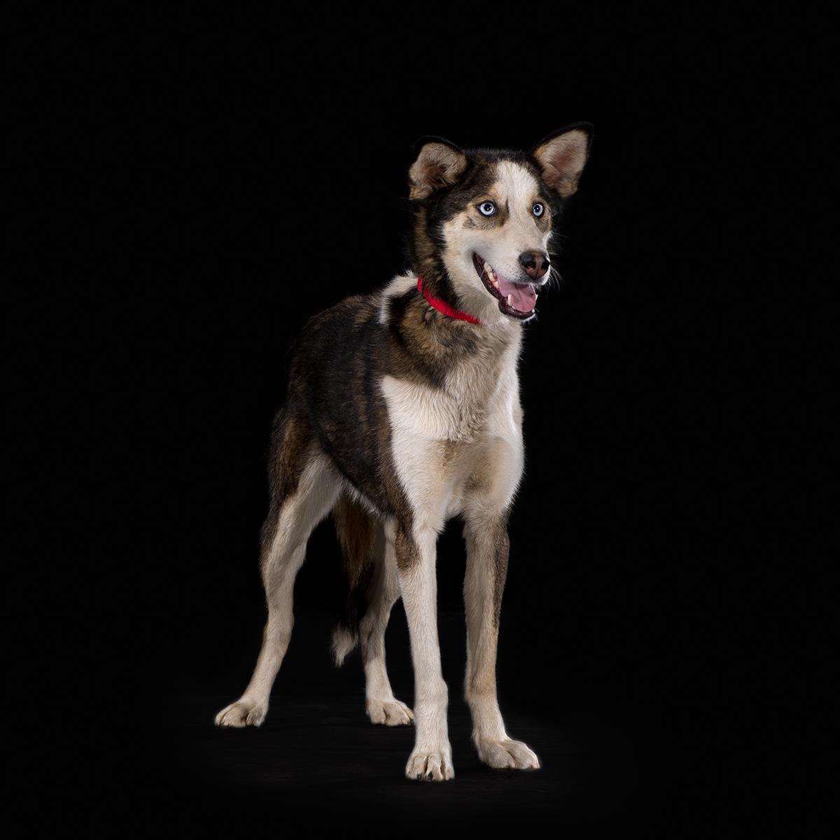 Dog With Fan : Quadruple dog fan club draw sp kennel