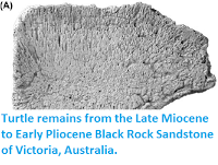 http://sciencythoughts.blogspot.co.uk/2015/11/turtle-remains-from-late-miocene-to.html