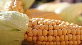 فوائد الذرة الصحية مدهشة لا تعرفها!