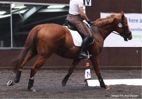 behavior observation using ridden horse ethogram