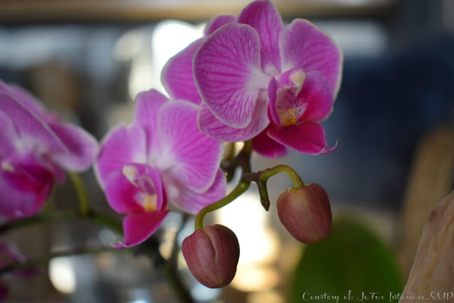 A Real Orchid photograph taken with close up shot and bright  lighting with  flash disabled