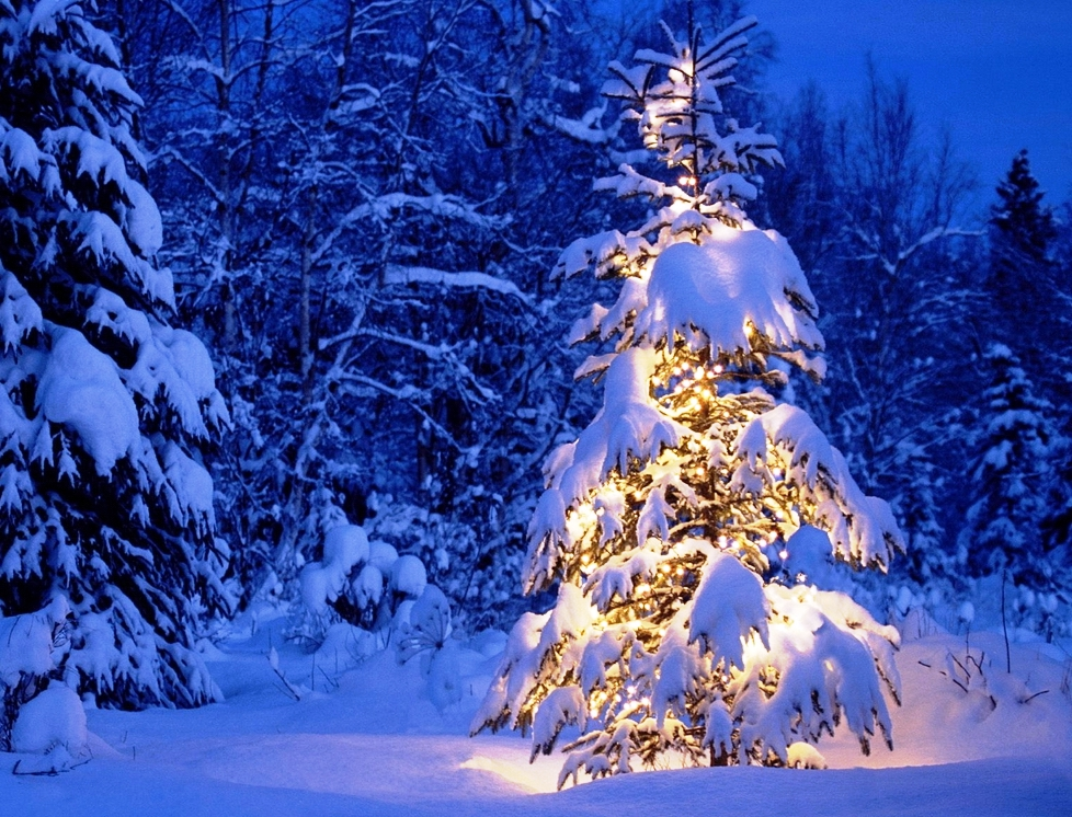 Wallpapers photos images new christmas tree nature - Christmas nature wallpaper ...