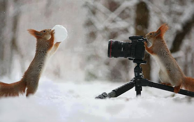 Photography, The moments of squirrel filming