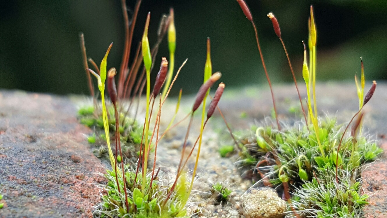 Moss is a unique plant 21