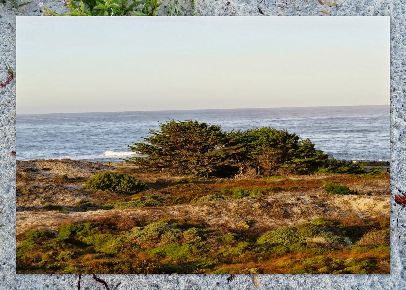 Cypress and Beach at Asilomar