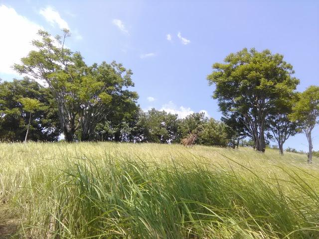 Hijaunya Bukit Belong di Gunaksa, Dawan, Klungkung