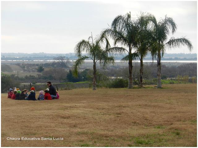 Las pindó en el paisaje de la Chacra - Chacra Educativa Santa Lucía