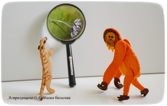 magija-biologii-palchikovyj-teatr-surikat-orangutan-lupa-naezdnik-telenomus