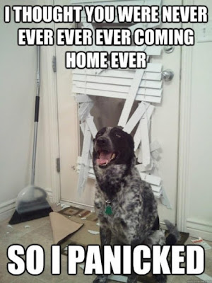 I Thought You were never coming back - #lovepuppies #pets #puppy #adorable #puppies #mypets #mydog