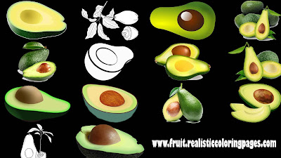 great avocado fruit clipart free download