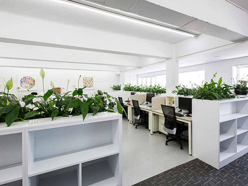 Indoor Plants Melbourne Office Plants Hire Is A Great