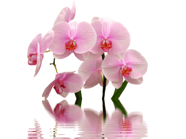 orquideas-como-cuidar
