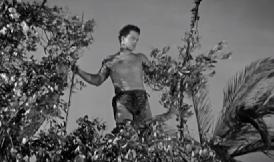 Bomba, a dzsungelfiú