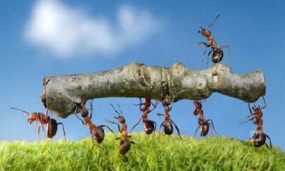 Karıncaların Özellikleri Yaşamı ve Kaç Türü Vardır?