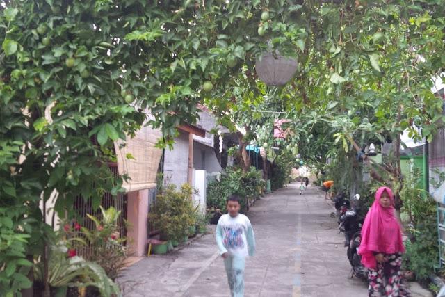 Kampung alan Anggur Kabat Banyuwangi.