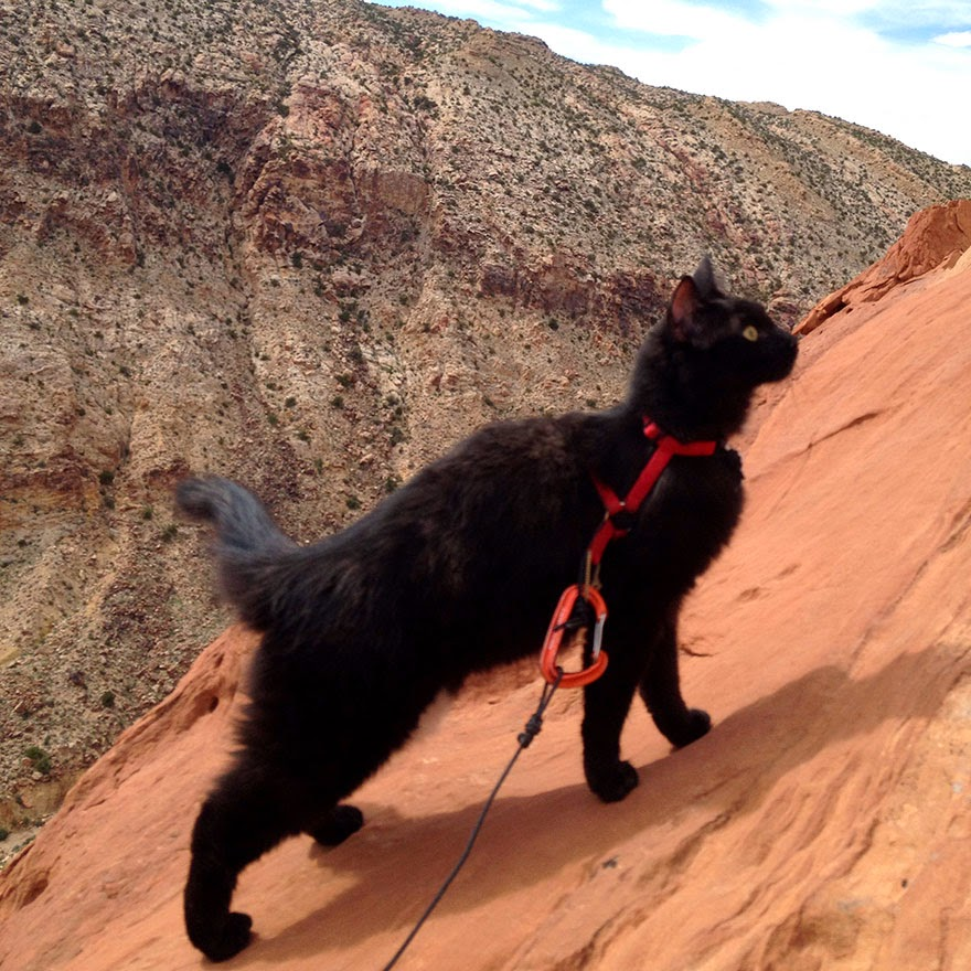 Millie's gear consists of a harness, a leash and some rope - My Adopted Cat Is The Best Climbing Partner Ever