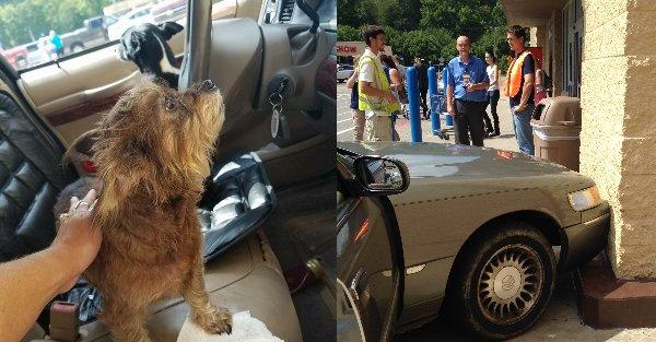 Cão conduz carro e choca com muro de supermercado