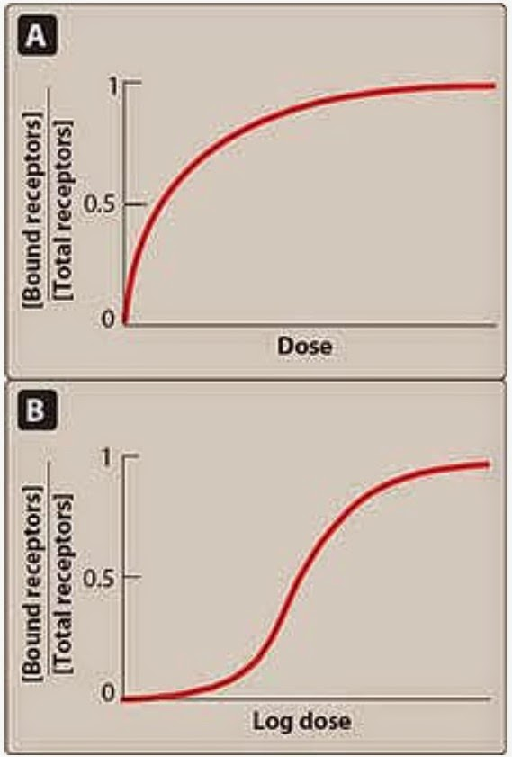relationship between drug concentration and response