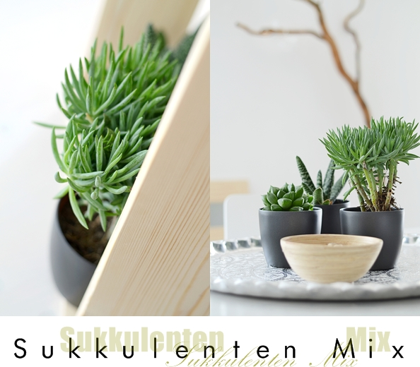 sukkulenten im holzrahmen sinnenrausch diy und interior blog. Black Bedroom Furniture Sets. Home Design Ideas