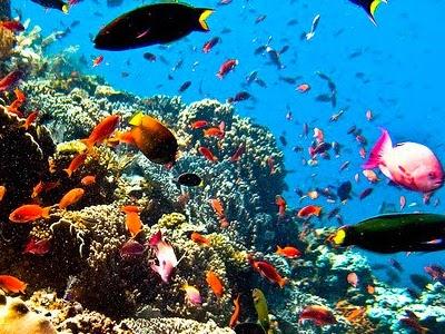 Taman Laut Siladen Manado Tua Dan Bunaken