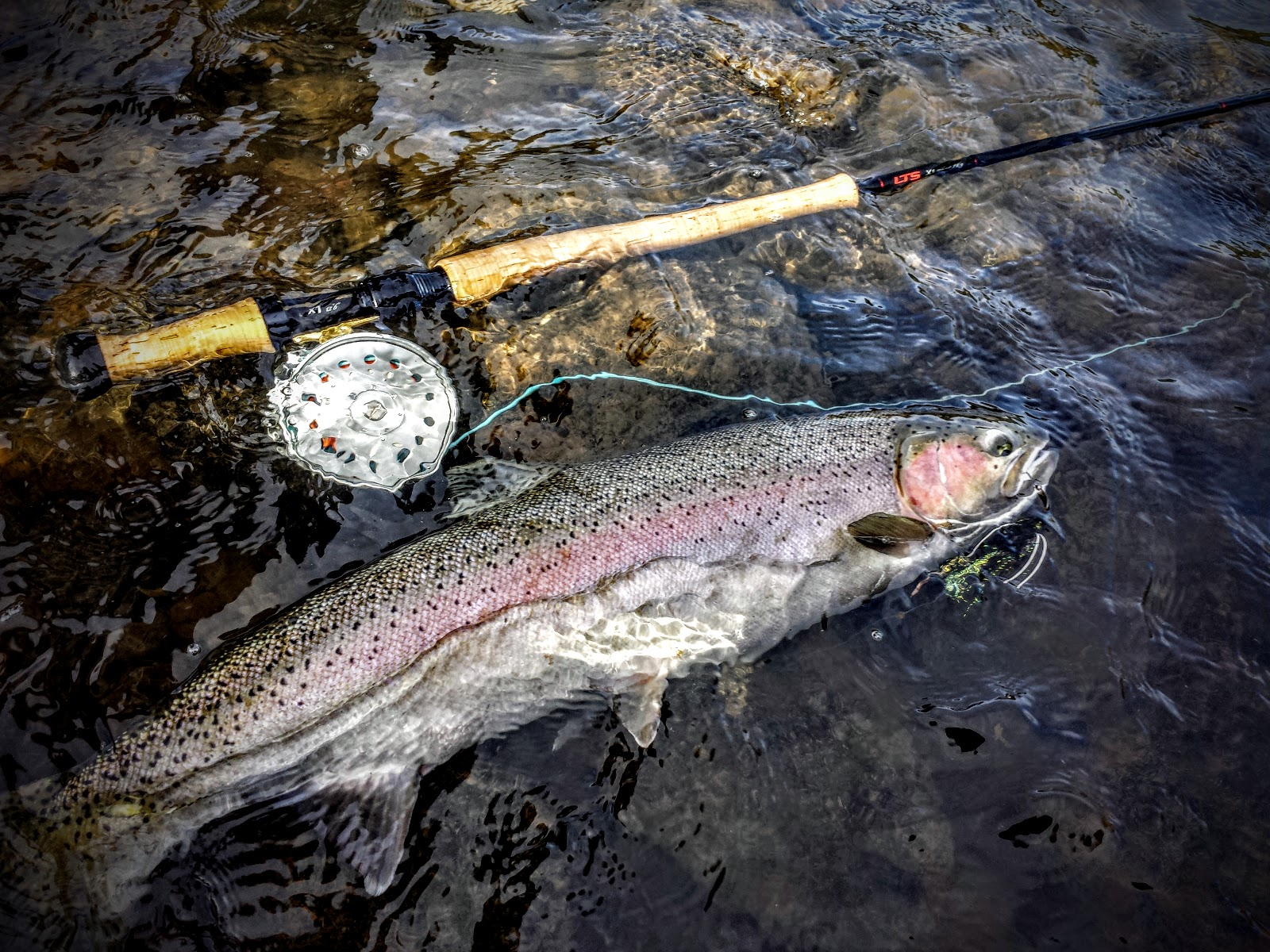 Rogue River And Southern Oregon Fly Fishing Guide Fins