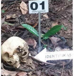 Tengkorak dan Tulang Berulang Manusia di Kejuruan Muda, Aceh Tamiang