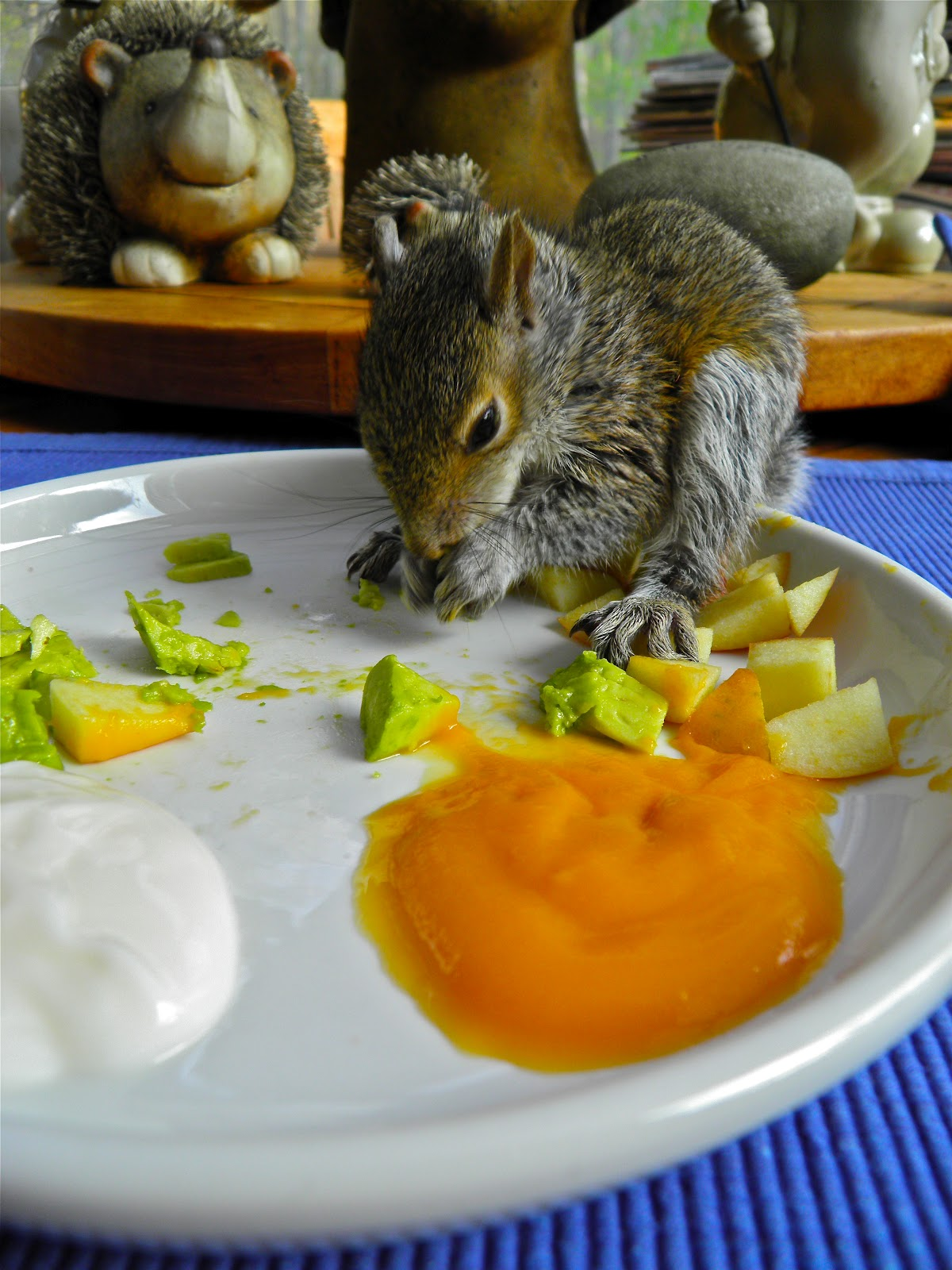 From Captain S Daughter To Army Mom Baby Squirrel Rescue