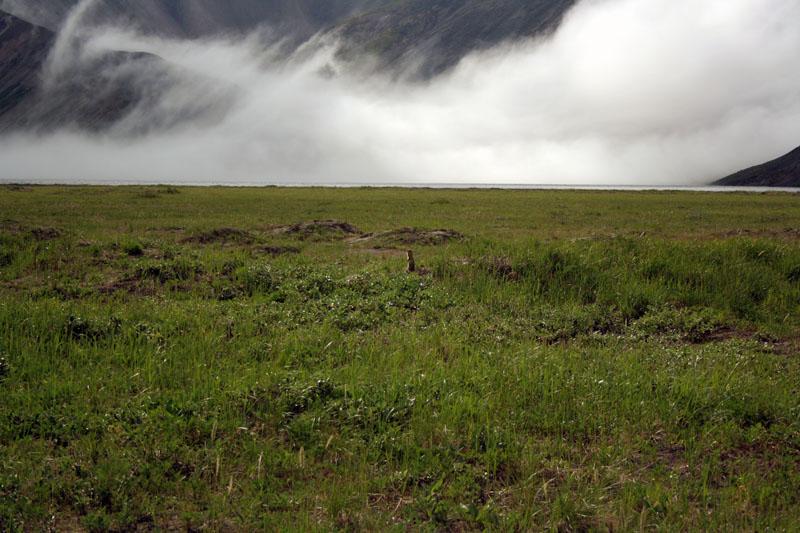 суслик и озеро кетачан камчатка