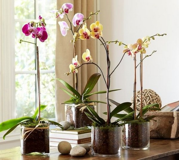 Decorate Your Interior With Orchids 8