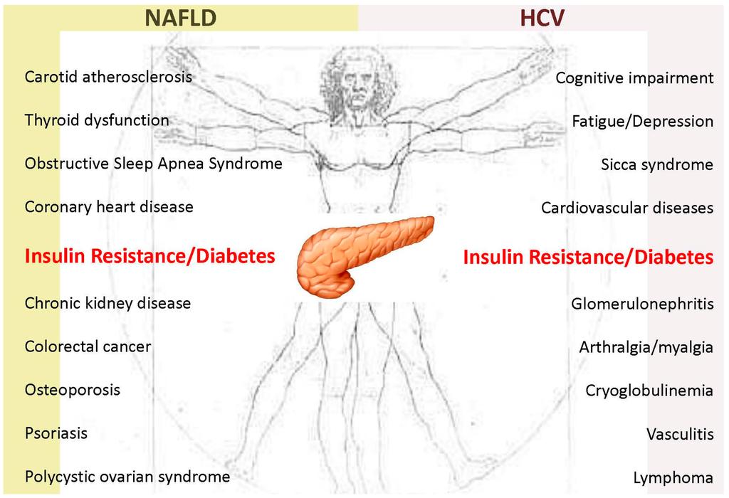 relationship between hepatitis and diabetes