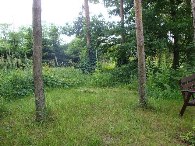 działka w lesie sosnowym