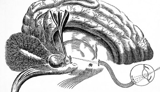 The Pineal Gland: One Of The Biggest Secrets Kept From Humanity