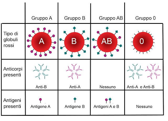 Come sapere il gruppo sanguigno