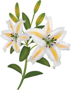 bunga-lily23