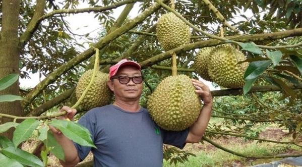 Durian gergasi 18kg dibida RM9,000 sebiji