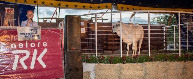 18º Remate da Fazenda Coqueiral é realizado com sucesso, em Sairé