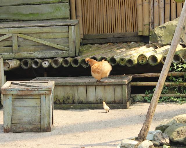 IMG 4082 - Wildlands Adventure Zoo Emmen