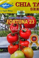 jual benih tomat fortuna 23,benih tomat fortuna 23,tomat fortuna 23,budidaya tomat,tanaman tomat,benih tomat,lmga agro
