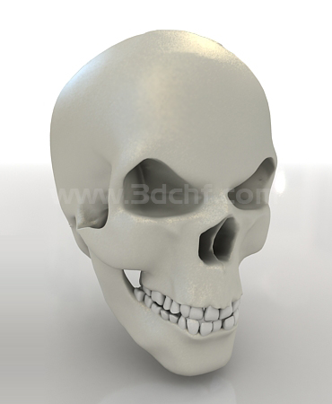 skull 3d model download