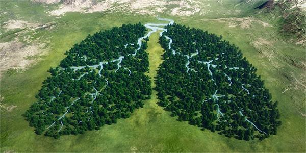 интересные факты про тропические леса Амазонки