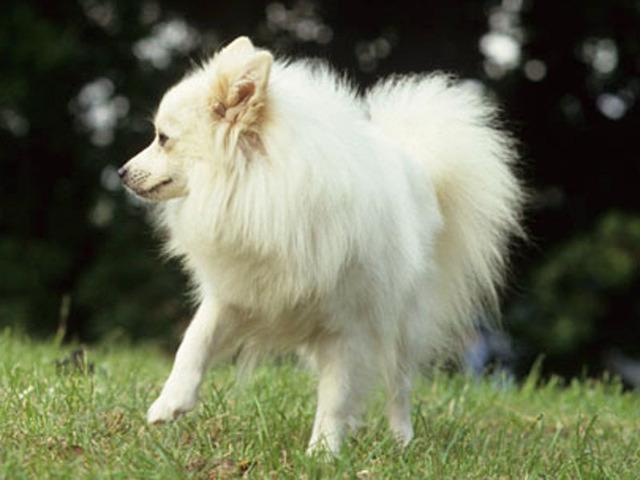 100 Most Popular Dog Names