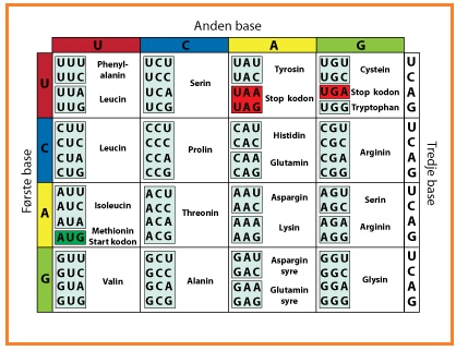 Biologi Gonzaga Soal Biologi Substansi Genetika Dan Genetika