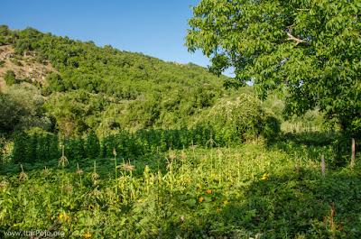 Garden in village Gradeshnica, Mariovo